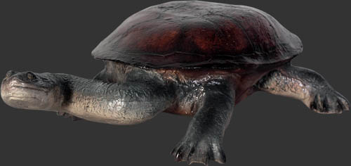 Long Neck Turtle Small / Turtle