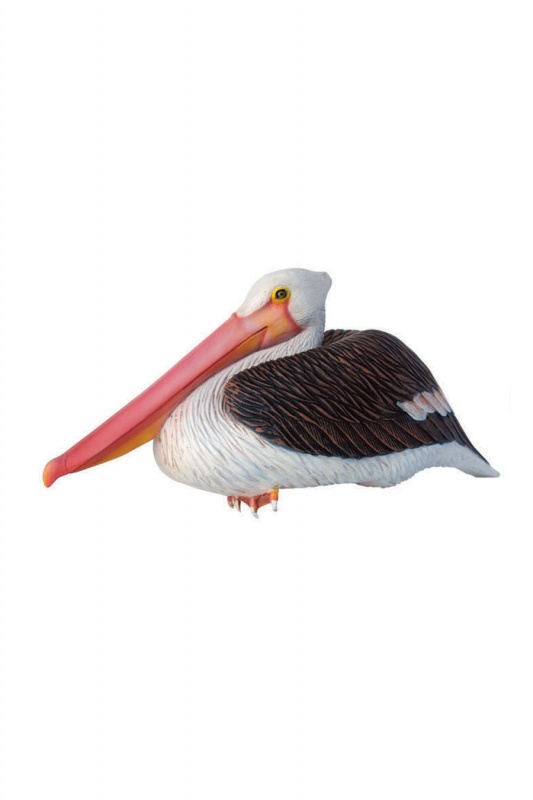 Pelican Sitting - Click Image to Close