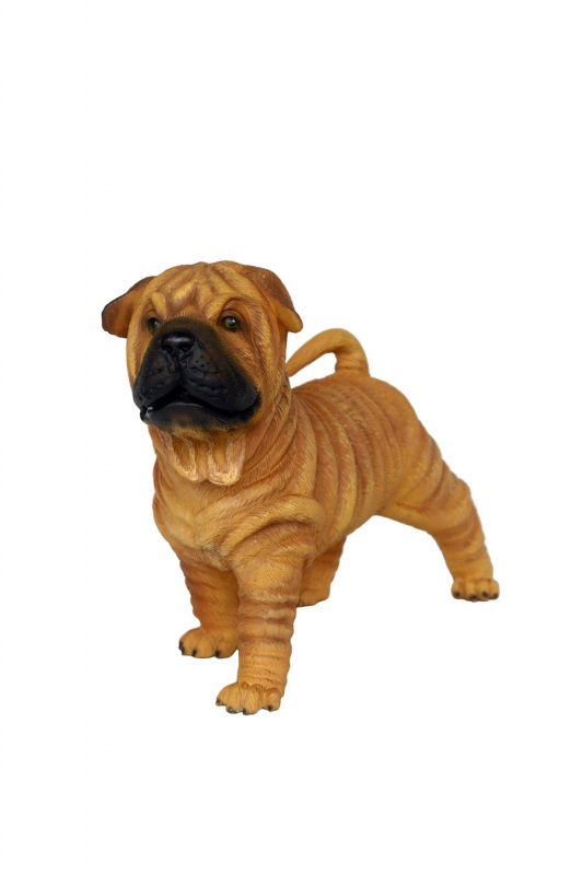 Shar-Pei dog puppy