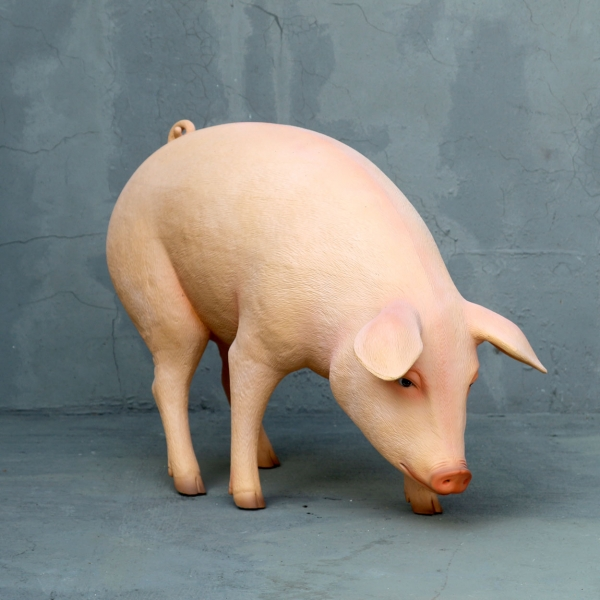 Pig with Head Down