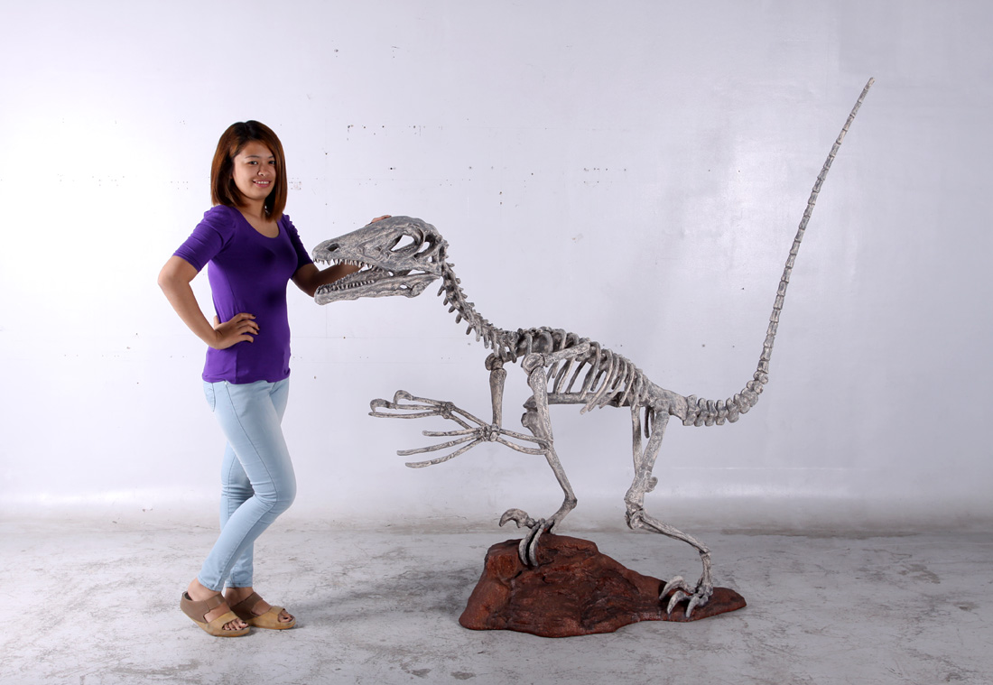 Deinonychus Skeleton