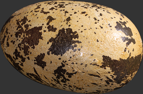 "Theropod Egg 9"" - Click Image to Close"