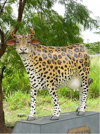Cheetah Cow (with or without Horns)