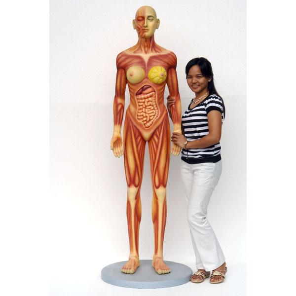 Human Anatomy Female Statue